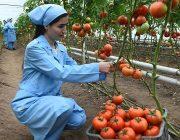 Экспорт сельхозтоваров из Таджикистана за рубеж вырос на 35,8%