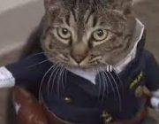 Полицией в Японском городе управляет кошка