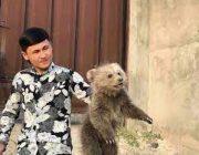 Как душанбинские волонтеры спасли медвежат от смерти